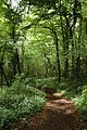 Footpath through woodland to Tintern - geograph.org.uk - 803692.jpg