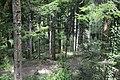 Forêt domaniale des Fanges (4).jpg