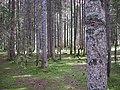 Forest (305749672).jpg