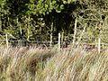 Forest boundary on Mynydd Llwyd - geograph.org.uk - 652109.jpg