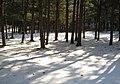 Forest floor, Songnisan - panoramio.jpg