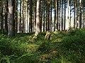 Forest near the Große Bode 10.jpg