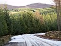 Forestry Road - geograph.org.uk - 324480.jpg