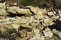 Fossil-Bluff-20070423-031.jpg