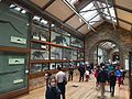Fossil collection london.JPG