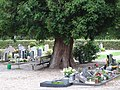 Friedhof Materborn PM19-08.jpg
