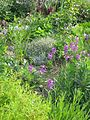Front garden - clockwise tour around the perimeter ^ 5 - Flickr - peganum.jpg