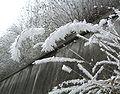 Frost on grasses.jpg