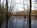 Frozen Teufelsbruch swamp next to crossing path.jpg