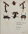 Fungi agaricus seriesI 010.jpg