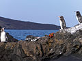 Galápagos Inseln, Ecuador (13899343411).jpg