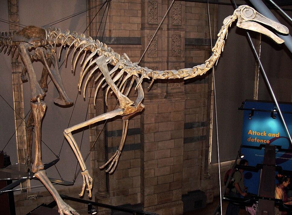 Gallimimus bullatus.001 - Natural History Museum of London