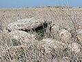 Gamla in Golan 14.jpg