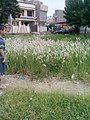 Garden's 17.jpg
