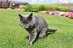 Garden insurgent !IMG 1780 (9487500140).jpg