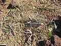 Gardenology.org-IMG 2444 hunt0903.jpg