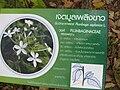 Gardenology.org-IMG 7300 qsbg11mar.jpg