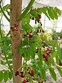 Gardenology.org-IMG 7965 qsbg11mar.jpg