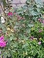 Gardens in Baghdad 57.jpg