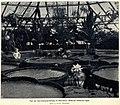 Gartenbauausstellung in Düsseldorf 1904.jpg