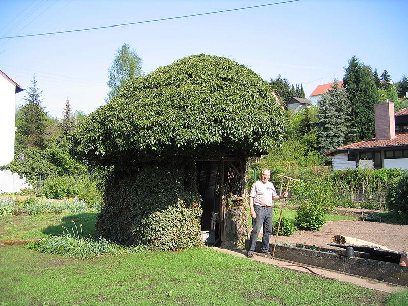 File:Gartenlaube in der Ortsmitte.JPG