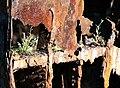 Gayundah,woody point (8120603245).jpg