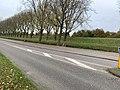 Geniedijk bij de A-weg na kap van 1 rij bomen, foto 1.JPEG