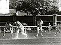 Geoffrey Boycott dismissed by Richard Collinge. February 1978, Wellington.jpg