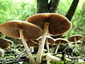 Giant Mushrooms - Auckland.jpg