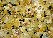 autumn leaves and seeds