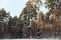 Glade - panoramio (3).jpg