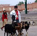 Goats and beatiful girls in Ecquador.jpg