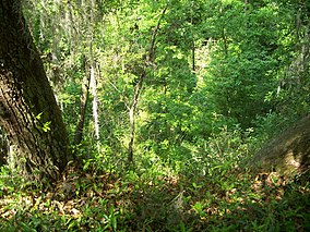 Gold Head Branch SP ravine02.jpg