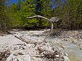 Gozd Martuljek - river6.jpg