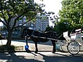 Grand Hotel, Victoria with horse tour - panoramio.jpg