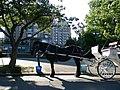 Grand Hotel, Victoria with horse tour - panoramio.jpg