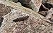 Grasshopper in Quesnel, BC (DSCF5137).jpg