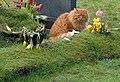 Graveside cat - geograph.org.uk - 724491.jpg