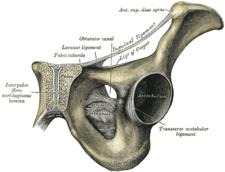 Canalis obturatorius a struktury pánve
