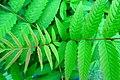 Green - Flickr - Stiller Beobachter (6).jpg