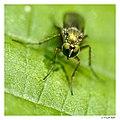 Green eyes (5538338038).jpg
