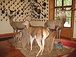 Gressoney-Saint-Jean-Museo-IMG 1837.JPG