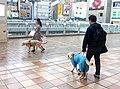 Guidedogs in kitasenju tokyo 2017-5-1.JPG