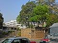 HK Jordan Austin Road Gun Club Hill Barrack's tree n apartment Mar-2013.JPG