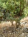 Hadassah Trail P1150516.JPG