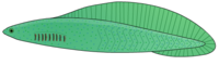Haikouichthys4.png