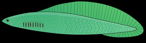 Haikouichthys4