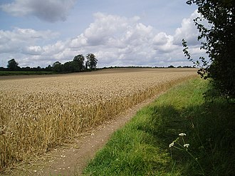 Hampshire Downs - The Hampshire Downs are one of the breadbaskets of Southern England. Here wheat is growing on the free draining chalk downs above Alresford.