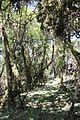 Harenna Forest (16325788202).jpg