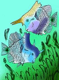 Hensodon spinosus.jpg